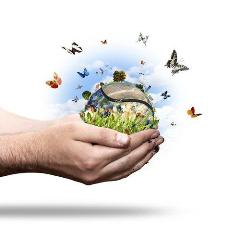 Traduction environnement (texte ou document)